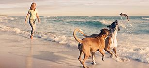 Pet Tourism and the Rising Value of the Hound Pound
